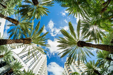 A stock photo of palm trees in the Brickell area of Miami, Florida.