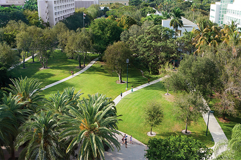 An aerial photo of the University of Miami's Coral Gables campus greenery.