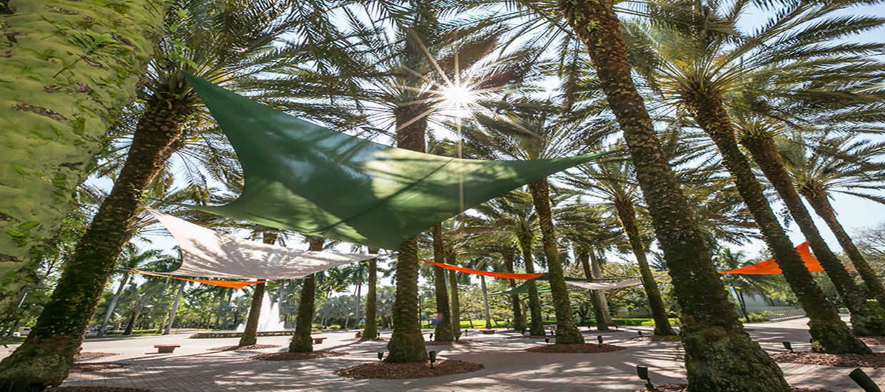 An image of hammocks hanging between trees on the University of Miami Coral Gables campus.