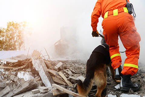 A stock photo of a fire rescue employee walking with a dog on a pile of rubble.